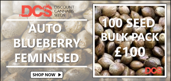 Auto Blueberry Feminised Cannabis Seeds | Discount Cannabis Seeds