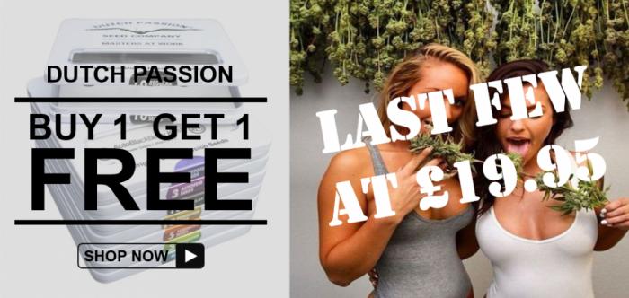 BOGOF Dutch Passion - Discount Cannabis Seeds