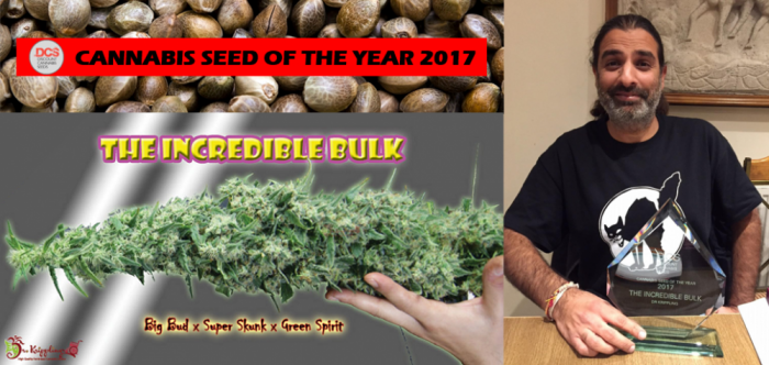 CSOTY 2017 | Dr Krippling Incredible Bulk | Discount Cannabis Seeds