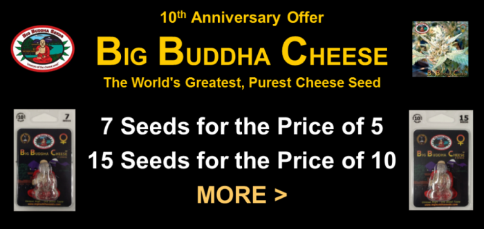 Big Buddha Cheese Promotion