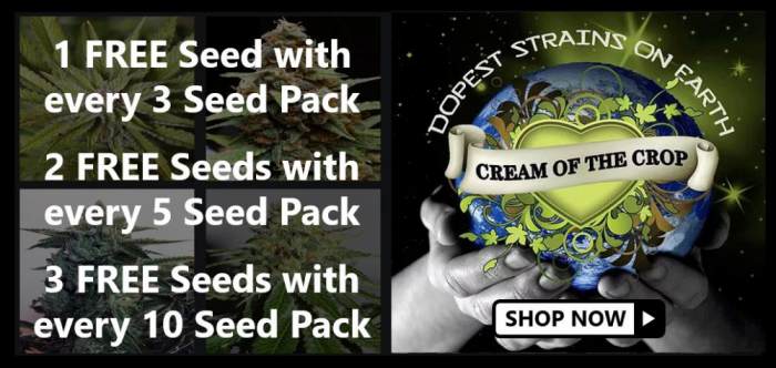 Free Cream of the Crop Seeds - Discount Cannabis Seeds
