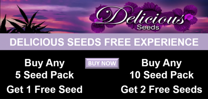 Delicious Seeds Promotion January 2018 | Discount Cannabis Seeds