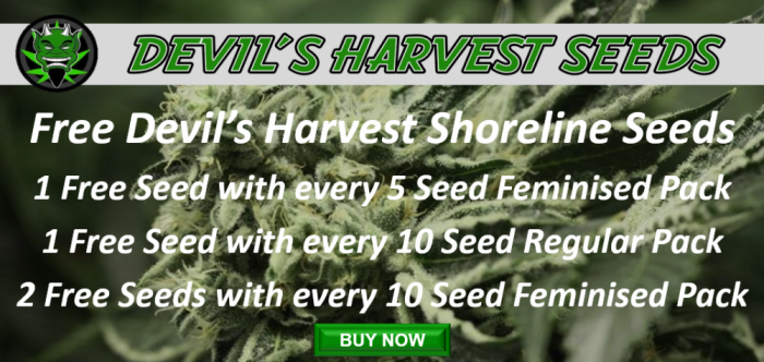 Devil's Harvest Free Shoreline Seeds Promotion | Discount Cannabis Seeds
