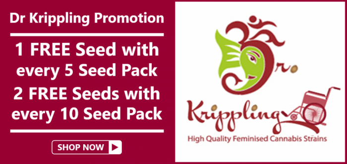 Dr Krippling Free Seeds from Discount Cannabis Seeds
