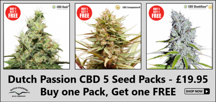 Dutch Passion CBD Cannabis Seeds - Discount Cannabis Seeds