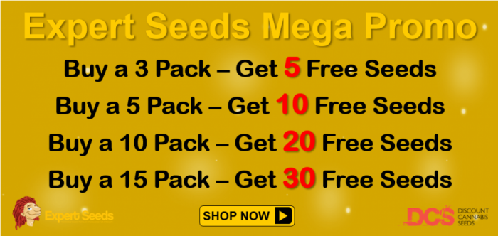 Expert Seeds - Discount Cannabis Seeds