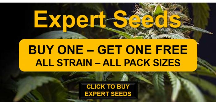 Expert Seeds | Buy One Get One Free | Discount Cannabis Seeds
