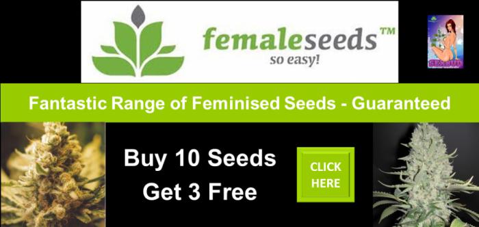 Free Female Seeds Promotion