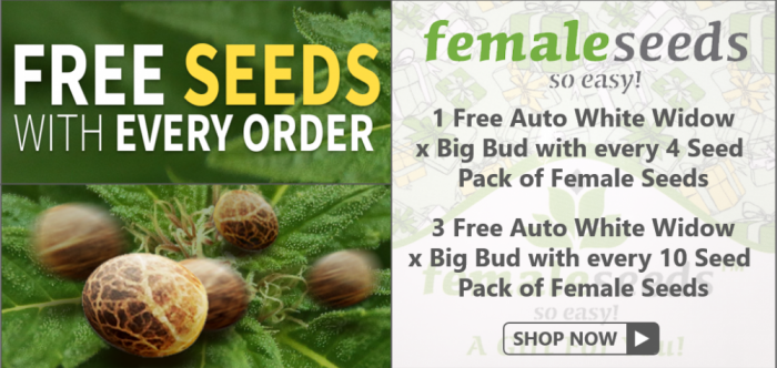 Free Auto WW x BB Female Seeds - Discount Cannabis Seeds