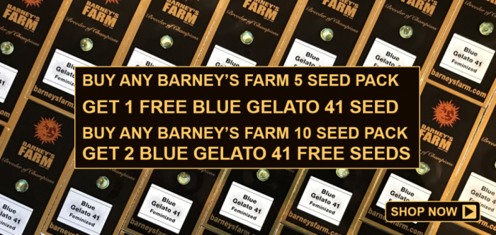 Free Barneys Farn Blue Gelato 41 Seeds - Discount Cannabis Seeds