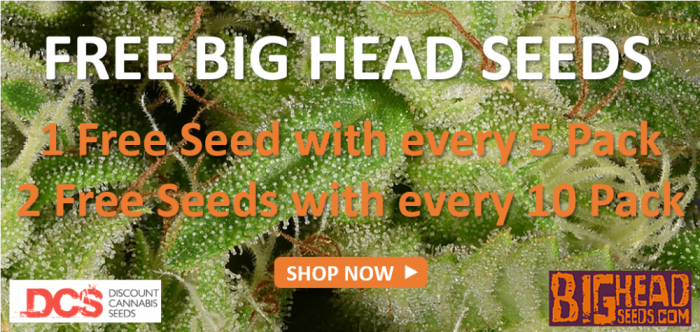 Free Big Head Seeds - Discount Cannabis Seeds