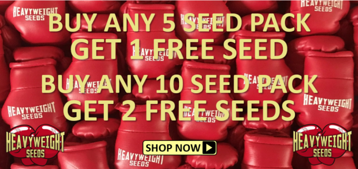 Free Heavyweight Seeds - Discount Cannabis Seeds