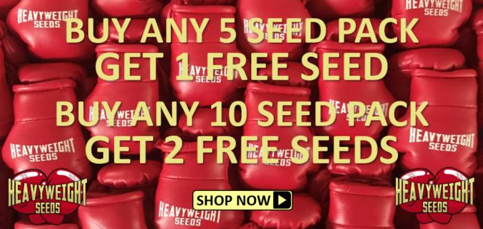 Free Heavyweight Seeds - Discount Cannabis Seeds