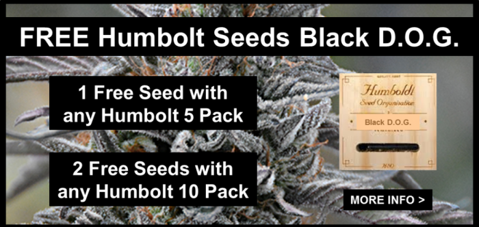 Humbolt Seeds Organisation | Free Black D.O.G. Cannabis Seeds