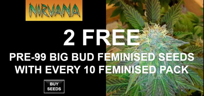 Free Nirvana Seeds | Discount Cannabis Seeds