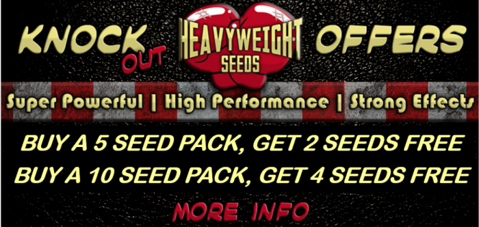 Free Heavyweight Seeds | Discount Cannabis Seeds