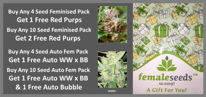 Free Female Seeds Promotion | Discount Cannabis Seeds