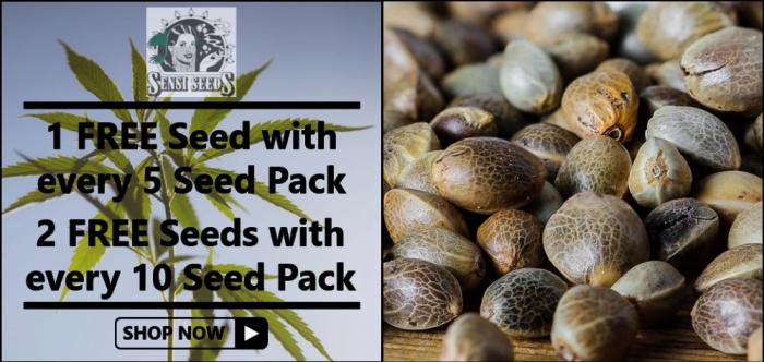 Free Sensi Seeds - Discount Cannabis Seeds