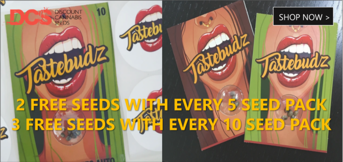 Free Tastebudz Seeds - Discount Cannabis Seeds