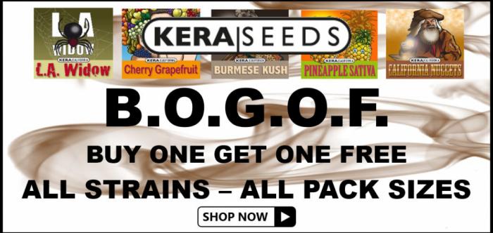 Kera Seeds BOGOF - Discount Cannabis Seeds