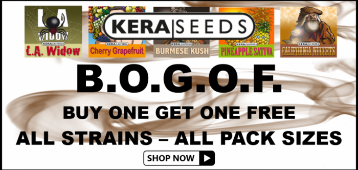 Kera Seeds BOGOF - Discount Cannabis Seeds