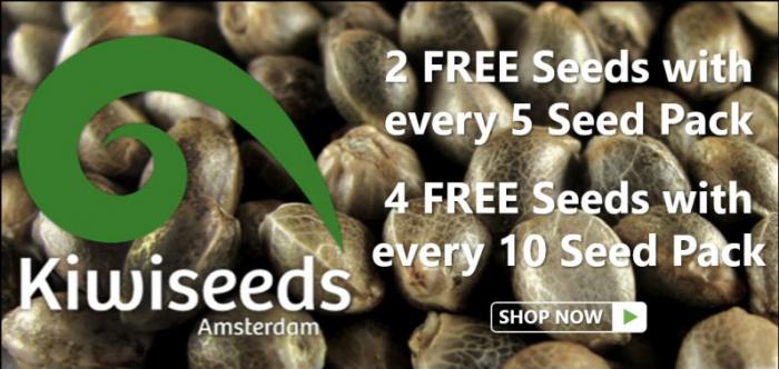 Kiwi Seeds - Discount Cannabis Seeds