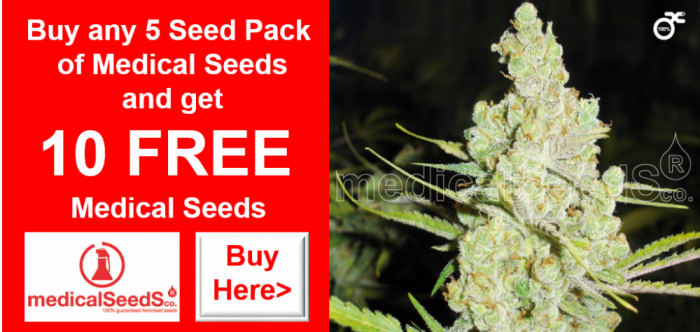 FREE Medical Seeds | Discount Cannabis Seeds