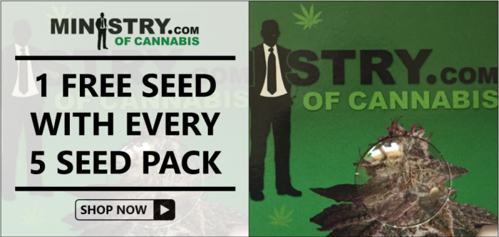 Free Ministry of Cannabis Seeds - Discount Cannabis Seeds