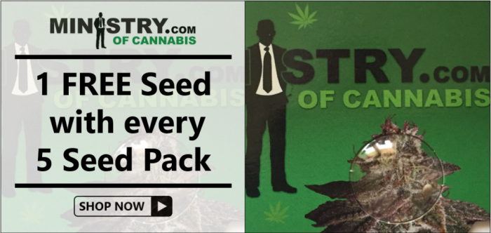 Ministry of Cannabis - Discount Cannabis Seeds