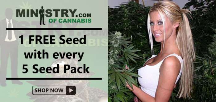 Ministry of Cannabis Free Seed Promotion