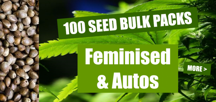 100 Bulk Seed Packs | Discount Cannabis Seeds
