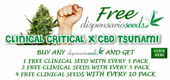 Dispensario Seeds Promotion | Discount Cannabis Seeds