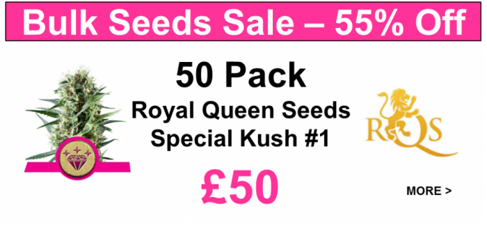 Special Kush #1 Bulk Pack Feminised Cannabis Seeds | Royal Queen Seeds