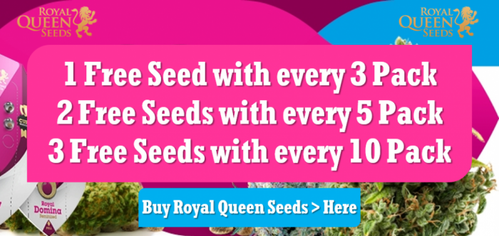 Royal Queen Seeds | Free Seeds Promotion | Discount Cannabis Seeds