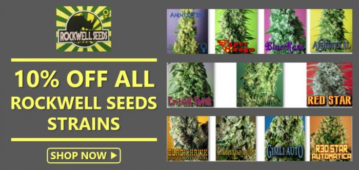 Buy Rockwell Seeds from Discount Cannabis Seeds