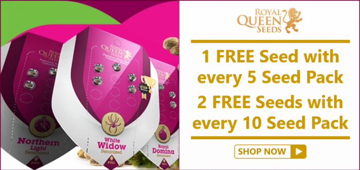 Free Royal Queen Seeds from Discount Cannabis Seeds