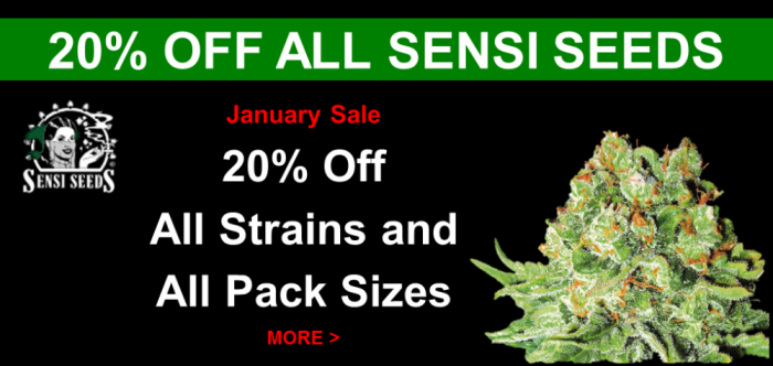 Sensi Seeds 20% Off all Strains and Pack Sizes