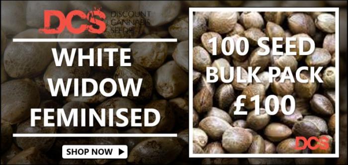 White Widow Feminised - Discount Cannabis Seeds