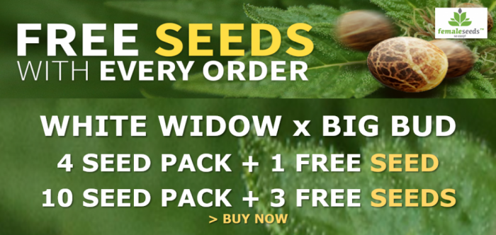 White Widow x Big Bud Free Seeds Promotion | Discount Cannabis Seeds