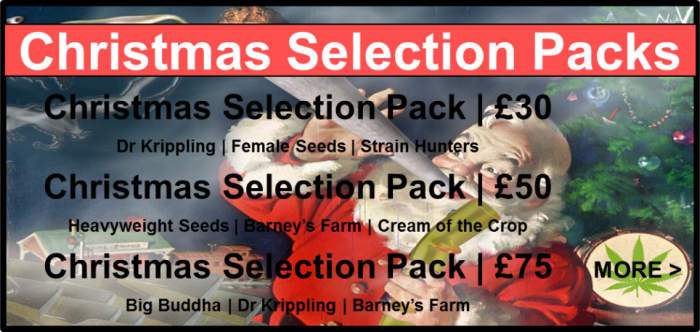 Christmas Selection Packs | Discount Cannabis Seeds