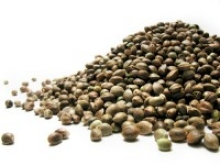 A - Z of Cannabis Seeds | Discount Cannabis Seeds
