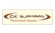 De Sjamann Seeds