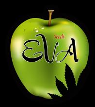 Eva Female Seeds