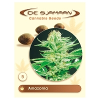 Amazonia Regular Cannabis Seeds