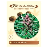 Purple Widow Regular Cannabis Seeds
