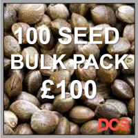 Auto Blueberry Feminised Cannabis Seeds  | 100 Bulk Seeds