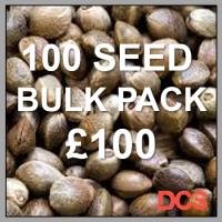 Critical + Feminised Cannabis Seeds    100 Bulk Seeds