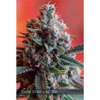 Dark Star x AK - 49 Feminised Cannabis Seeds | Vision Seeds