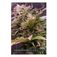 Vision Caramello Auto Feminised Cannabis Seeds | Vision Seeds