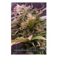 Vision Caramello Auto Feminised Cannabis Seeds | Vision Seeds